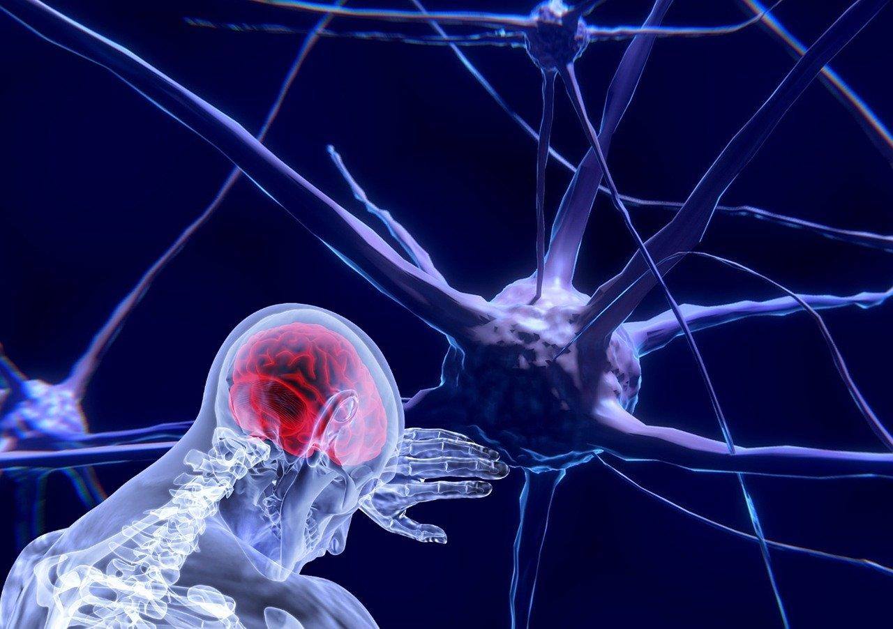 Fútbol y neurociencia